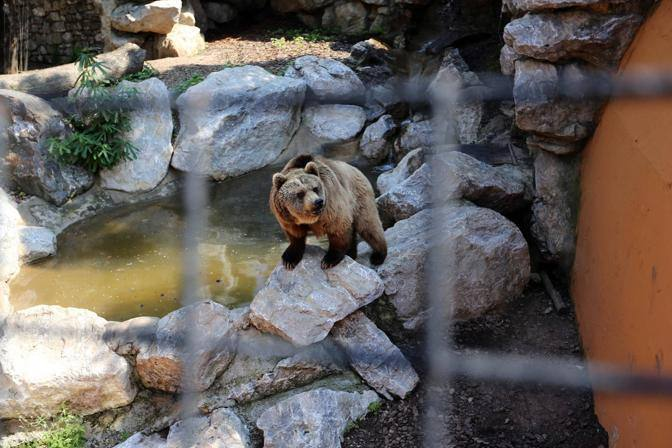 Gli animali del Parco Le Cornelle