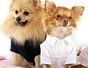 Cani modelli