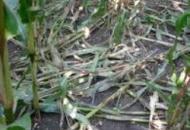 Agricoltura, si contano i danni della grandinata