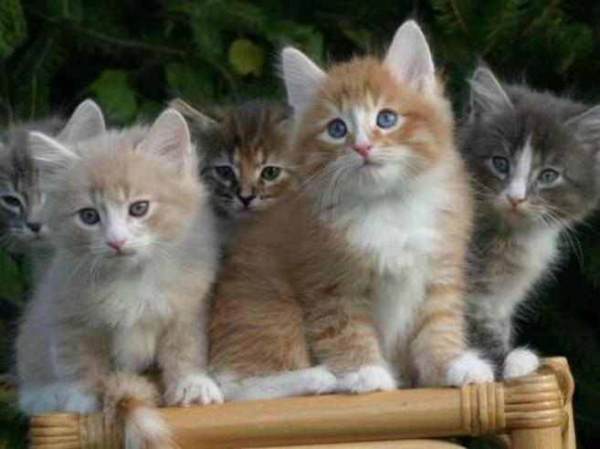 Bergamo, il «serial killer dei gatti» condannato a tre anni e mezzo di carcere
